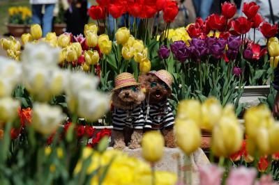 春のうきうきフェア♪その3 ~県立フラワーセンター・友愛の道から風車前花壇~