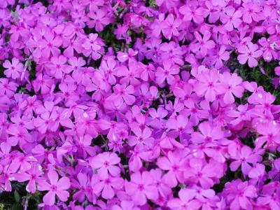 松花堂庭園と枚方市民の森の花々