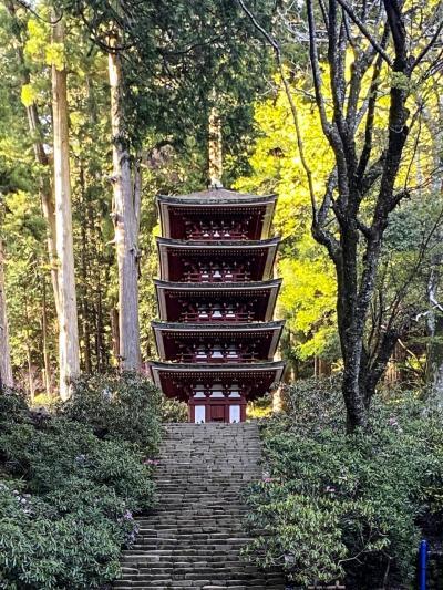 《2021. April》あみんちゅなにげに関西街歩きの旅奈良そのⅡ前編~女人高野室生寺と桜~