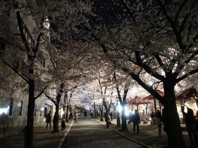 2021年京都の桜 その4~祇園の夜・山玄茶グルメと方広寺特別拝観