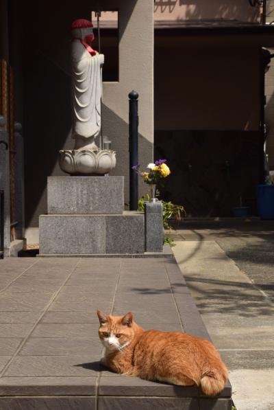 花まつりは花御堂探し 2021年は千駄木~谷中~上野へ +台湾ごはん