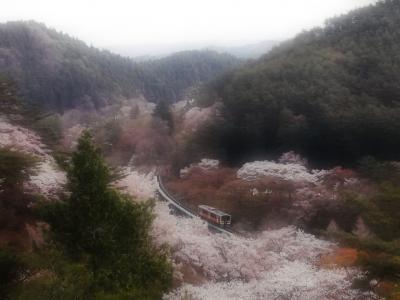 '21 春の福島・宮城駅さんぽ12 水郡線 桜が満開の矢祭山駅