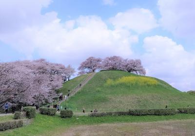 """桜が咲いた""""さきたま古墳群""""の巻 by サイクリング"""