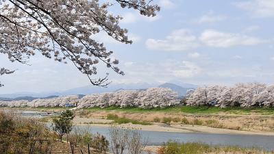 桜を求めて宮城県南部へ行ってみました