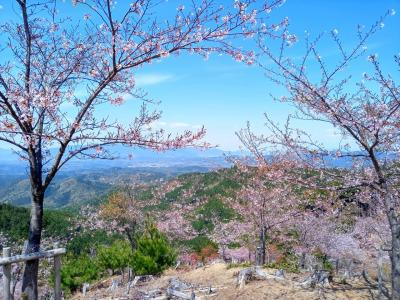 2021年吉野の桜と飛鳥散策①吉野