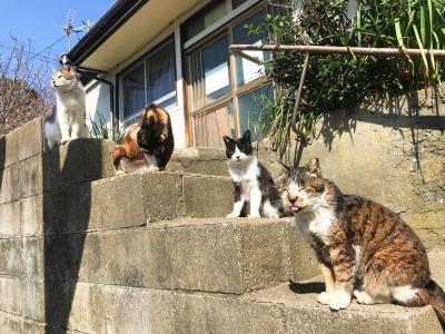 二つのあいのしま(相島と藍島)へ…ネコ時々観光の福岡旅【3】幸せ時間いっぱいの藍島と小倉編