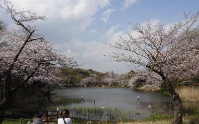 三ッ池公園のさくら 早咲きから遅咲きまで(39種) 2021
