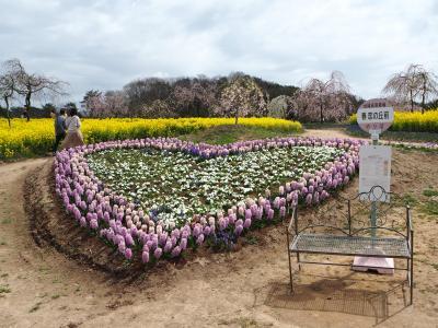 2021 お花見ドライブ@世羅町 ~甲山ふれあいの里&世羅高原農場・桜まつり+美波羅川・千本桜~