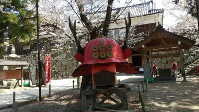 赤兜「真田六文銭」、いざ桜出陣!