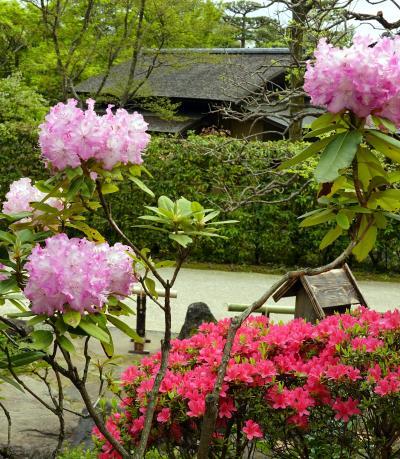 陽春の昭和記念公園