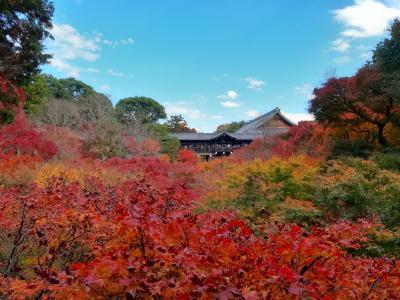 GoToトラベルで行く紅葉の京都(11月19日分)