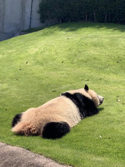 和歌山旅行~パンダと熊野と松阪牛~