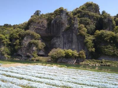 「一心寺のぼたん桜」「原尻の滝のチューリップ」春の花を愛でるお花見旅③(ネモフィラ)
