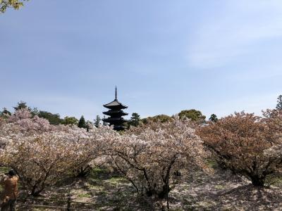 春の京都 ③