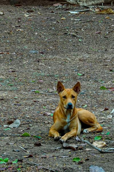 タイの遺跡を全部巡るつもりが、コロナの影響で北部だけで終わってしまった旅 その3 野良犬撃退