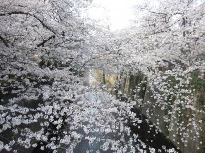 サザエとマスオ 東京さんぽ 桜 2021