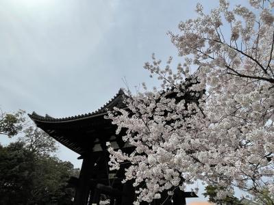 奈良で桜を見る春旅。