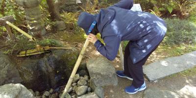 令和3年コロナに負けず京都・奈良の桜の下を歩きたい!その5、府立植物園(2021年4月10日最終日)