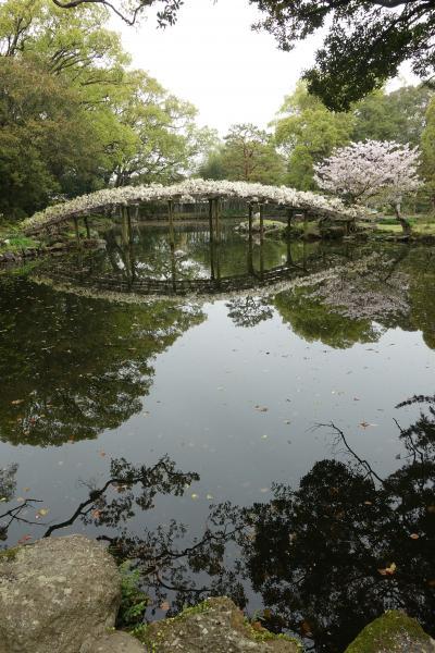 【2泊3日 春の愛媛 ひとり旅】お城と桜と橋と鯉!の巻 4