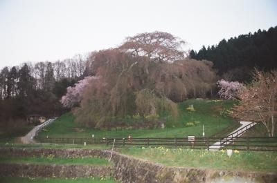 《2021. April》あみんちゅなにげに関西街歩きの旅奈良そのⅡ後編~宇陀の桜と道の駅~