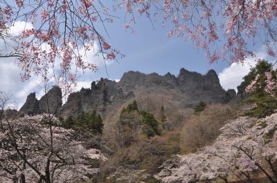 散り始めた桜を追って「妙義神社と妙義さくらの里」