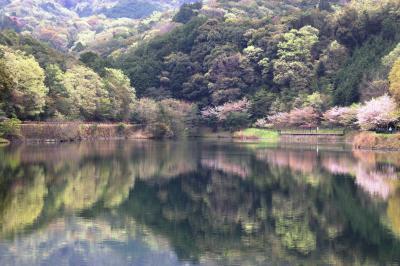 '21 SAKURAめぐり(泉佐野市上之郷新滝の池)