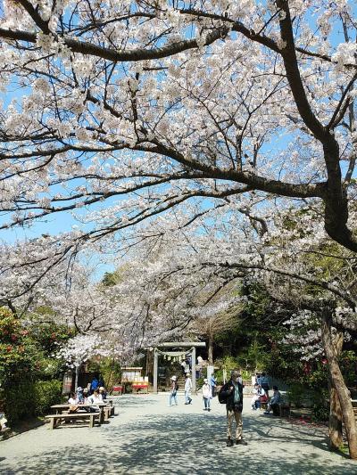 鎌倉2021桜 【2】源氏山公園&葛原岡神社