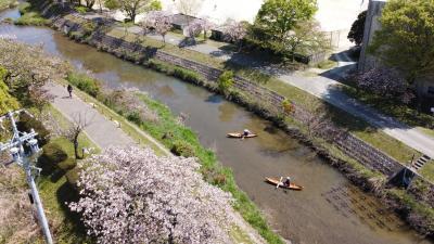 和船で東浦にある於大公園の八重桜を川から眺める