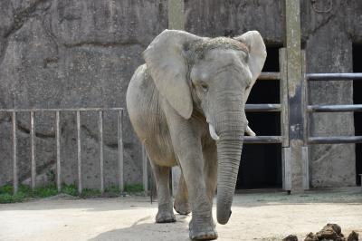 東武動物公園はエキサイティングです.