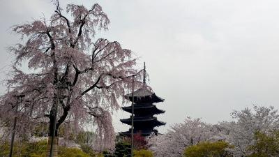京都駅周辺!徒歩で巡る東本願寺・西本願寺・東寺