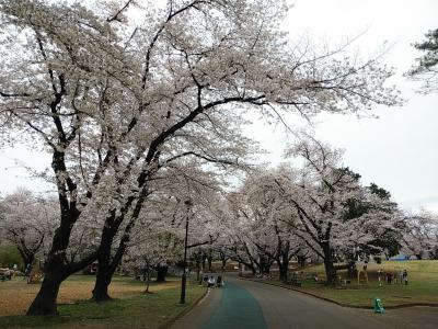 稲荷山公園2021桜