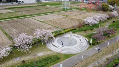 2代目マビミニ テストフライト in 於大公園の八重桜