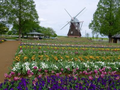チューリップとオランダ風車を見にあけぼの山農業公園へ