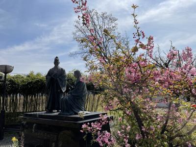 勝竜寺城公園の桜(2021年3月)