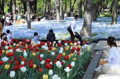 東京の日比谷公園に咲く春の花々