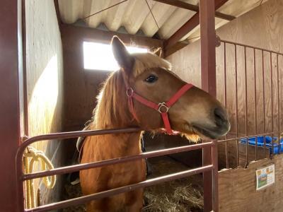 道南を巡る 馬と温泉の旅2~3日目