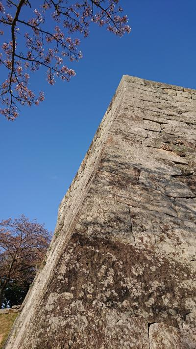 米Go城  桜吹雪to 吾子の春
