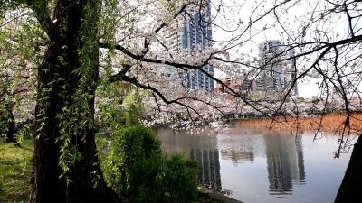今年の上野公園の桜はきれいでした。