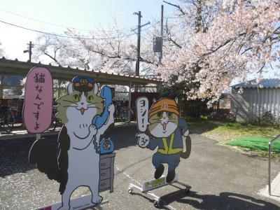 春彩の南東北7つの桜巡り 鶴ヶ城・三春滝桜・日光東照宮