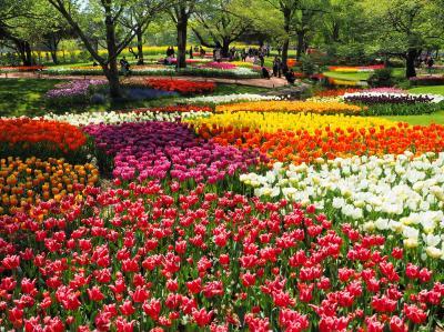 チューリップが咲き誇る♪昭和記念公園