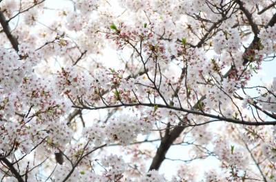 花見は近くの綱島公園で。季節は既に子供がアイスクリームを買う夏へ。