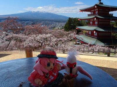 故郷の御山が恋しくて…! 富士・河口湖の春の景色を見に行くヨ! 1日目 #51