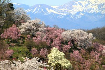 ◆百花繚乱~福島の桃源郷・花見山~花の谷コース
