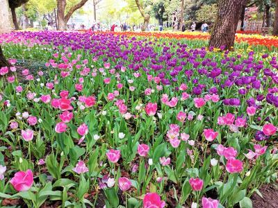 2021ガーデンネックレス 横浜 🌷 横浜公園から野毛まで散歩