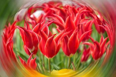 桜色に染まる春から、カラフルのチューリップを追いかけて。