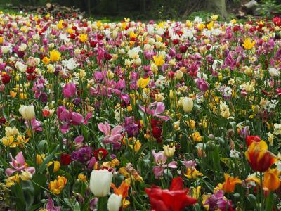可愛いものだらけの国、春のベルギー6泊8日②