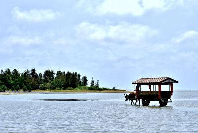2021 癒しを求めて八重山諸島5日間 4日目、西表島でカンムリワシ見っけ!