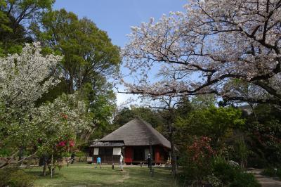 馬場花木園散歩 3月の花(43種) 2021年