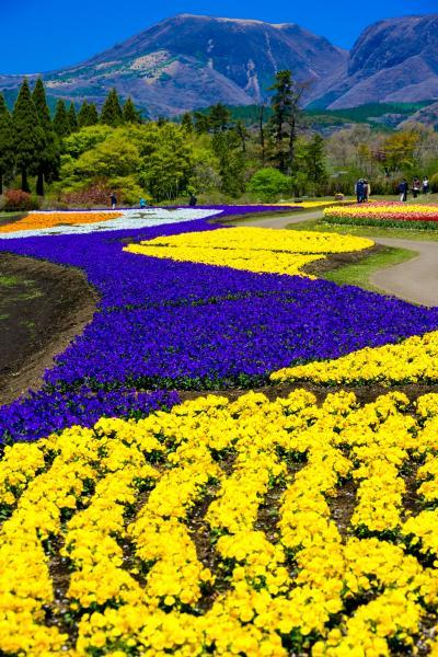 くじゅう花公園 2021年4月