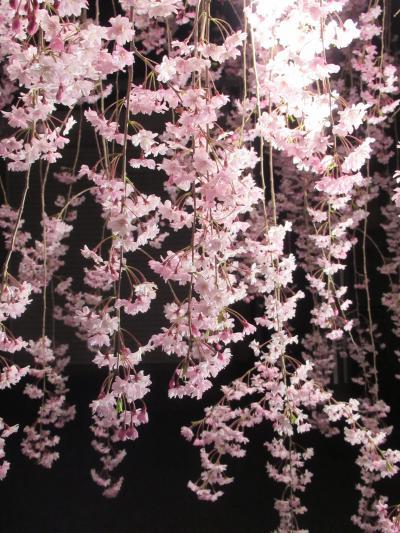 喜多方② 青空とライトアップに彩られて 満開の「日中線記念自転車歩行者道」のしだれ桜
